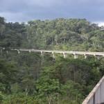 Eine Brücke durch den Urwald